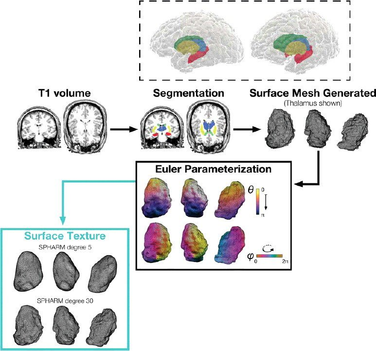 Shape-related characteristics of age-related differences in subcortical structures